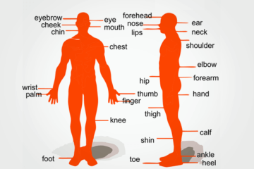 Ingles Foco - Dicas gratis - Parts of the body